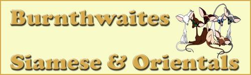 Burnthwaites Siamese and Orientals